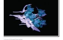 نیکی کریمی نمایشگاه عکس برپا می کند
